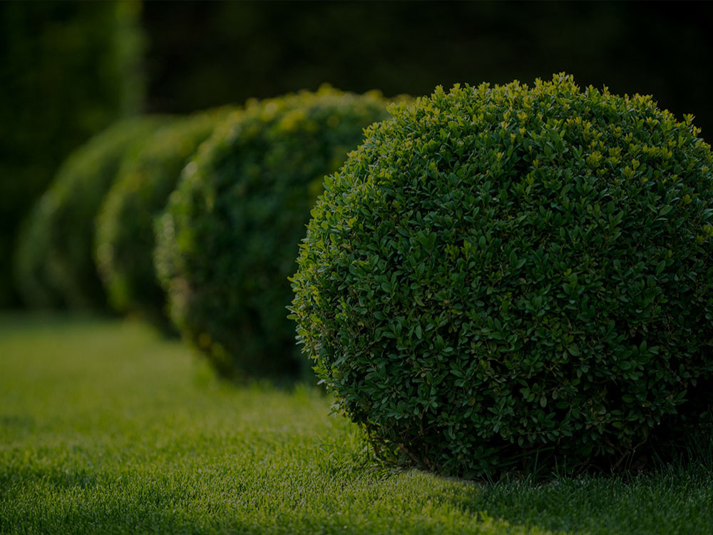 Sylvania, OH Landscaping